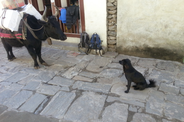 und ein Hund liefern sich ein Blickduell.