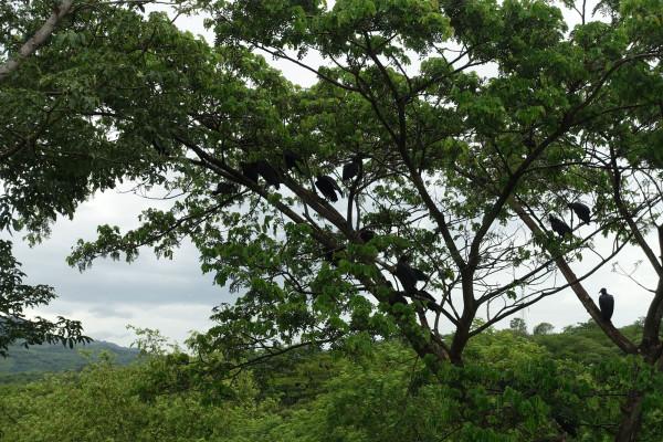 in Nicaragua