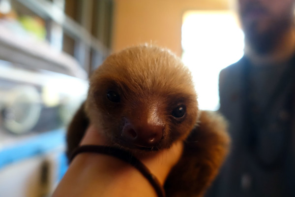Sloth Sanctuary