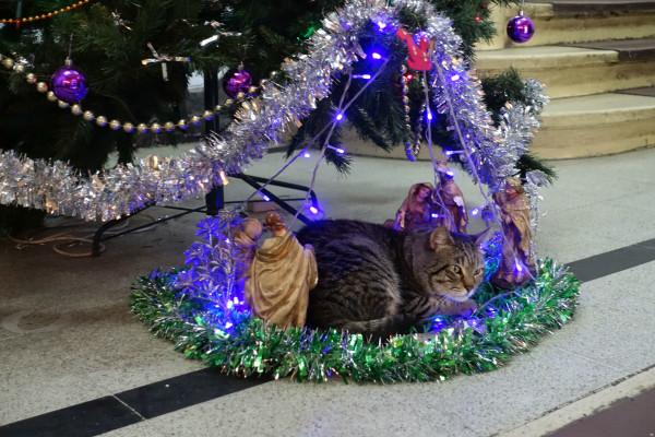 Neuinterpretation der Weihnachtskrippe