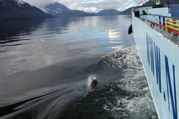 Delfine begleiten uns auf dem Weg aus der Stadt