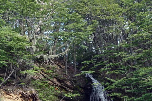 Wasserfall und Baum mit spanischem Moos